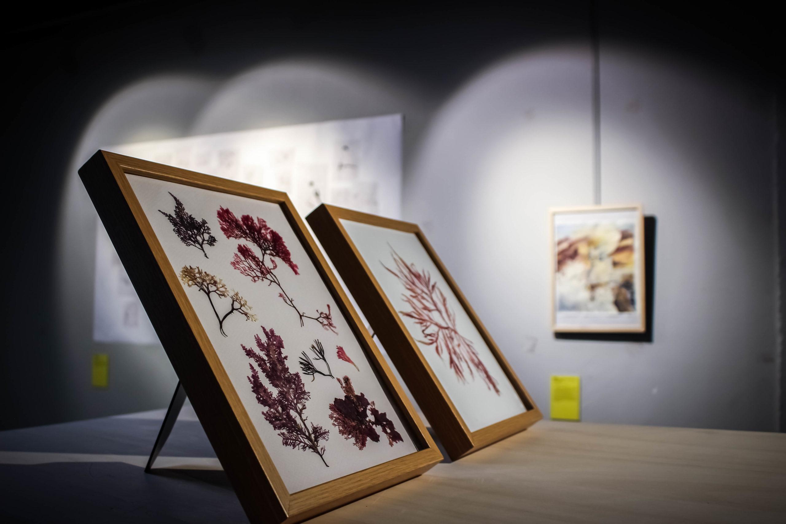 """""""Nature séchée"""" - Caroline Bauer - Exposition """"Souvenirs Déconfinés"""" ENSAPL"""